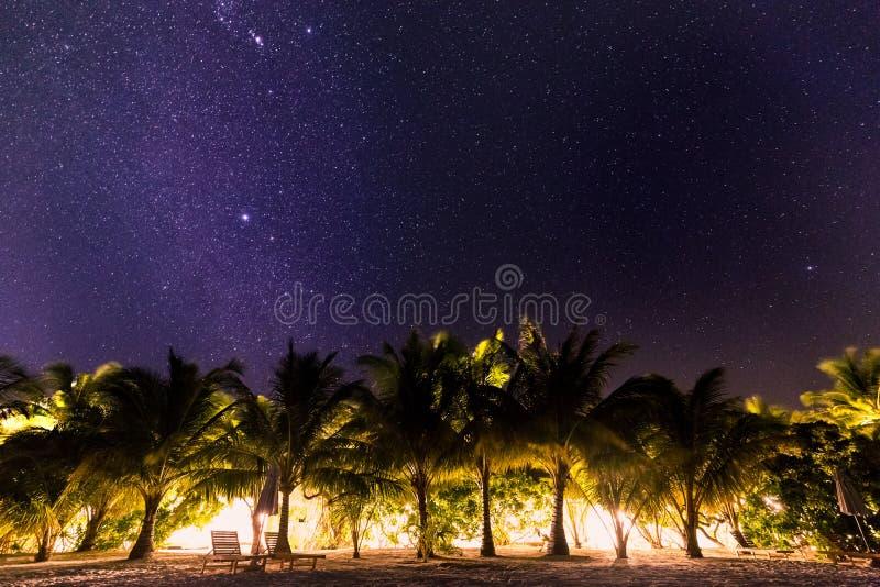 Natten sköt med palmträd och den mjölkaktiga vägen i bakgrund, tropisk varm natt arkivbilder