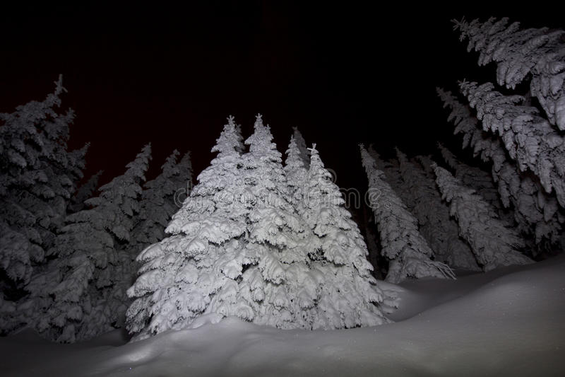 Natten tänder på djupa snowed trees från en skog royaltyfria foton