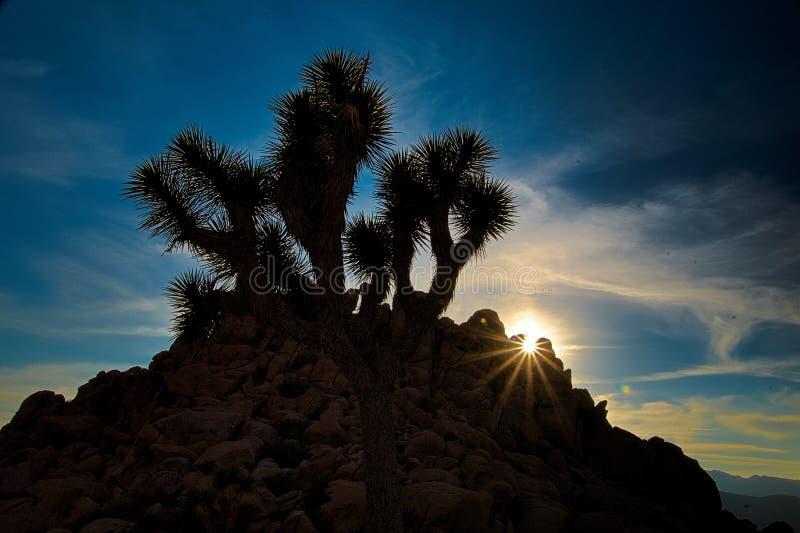 Natthimlar på Joshua Tree, Death Valley och lilla Tujunga royaltyfri bild