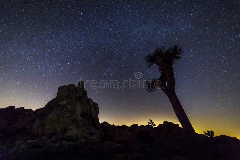 Natthimmel över Joshua Tree National Park, Kalifornien fotografering för bildbyråer
