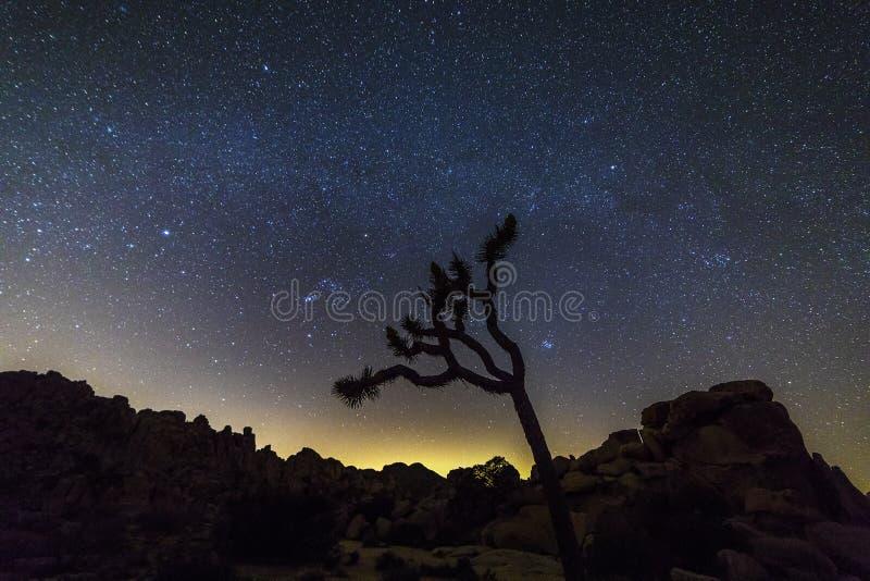 Natthimmel över Joshua Tree National Park, Kalifornien royaltyfri bild