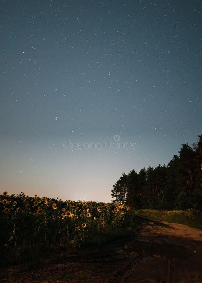Natthimmel med stjärnor mellan solrosfältet och den stjärnklara natten för skog royaltyfri fotografi