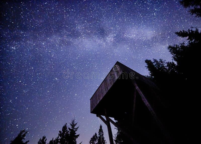 Natthimmel med Vintergatan över skogen och fågel-hålla ögonen på står högt Träd som omger platsen fotografering för bildbyråer