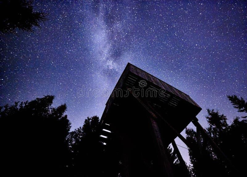 Natthimmel med Vintergatan över skogen och fågel-hålla ögonen på står högt Träd som omger platsen royaltyfria foton