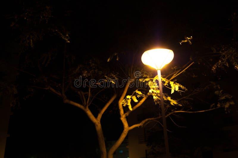 nattlampträd royaltyfria bilder