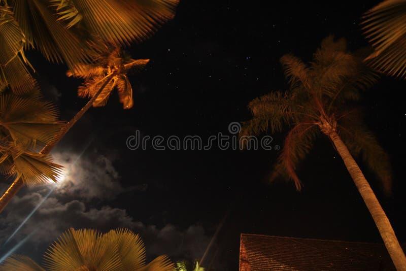 Nattlandskap och stjärnan royaltyfri fotografi