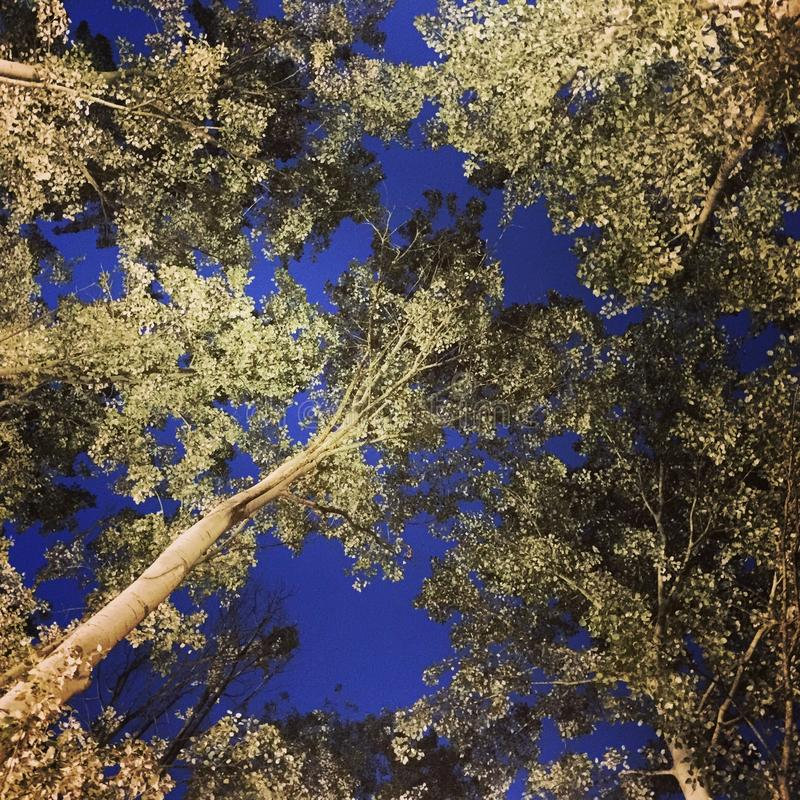 Nattlig himmel arkivfoton