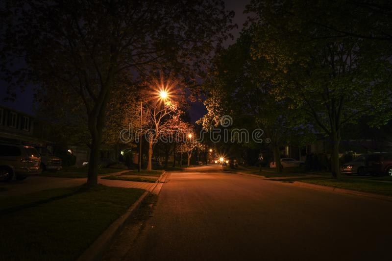 Nattljus på blåbärdrev royaltyfri foto