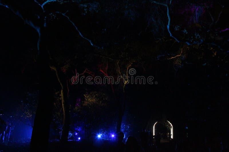 Nattljus: Skog av intrig royaltyfria foton