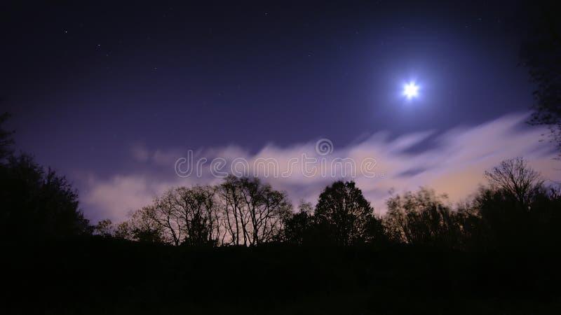 Nattplats med den trädprofiler, moln och månen royaltyfria foton