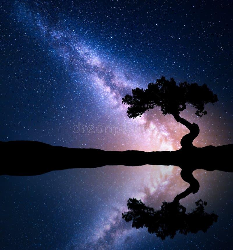 Nattplats med Vintergatan och det gamla trädet arkivbild