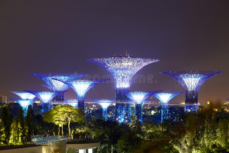 Nattsikt av den Supertree dungen i violeten, trädgårdar vid fjärden, Singapore