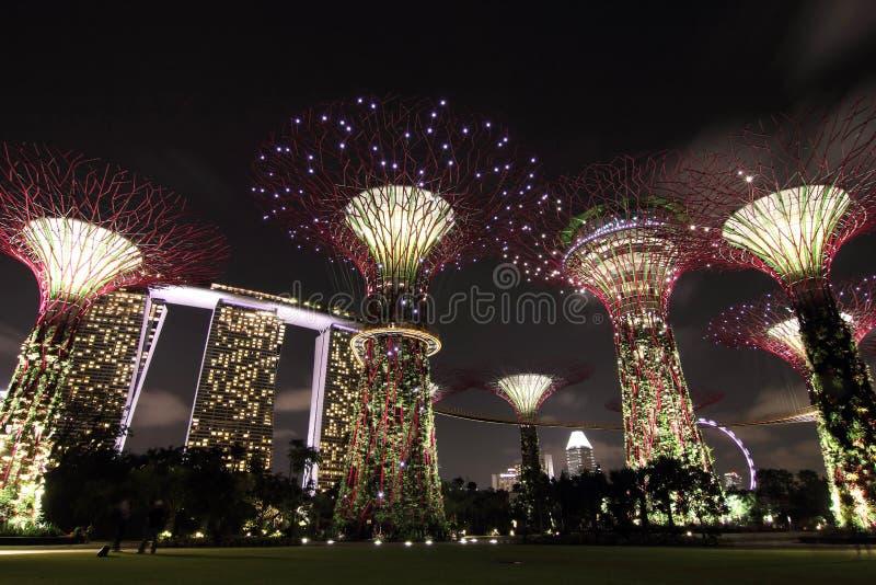Nattsikt av den Supertree dungen med Marina Bay  arkivfoto