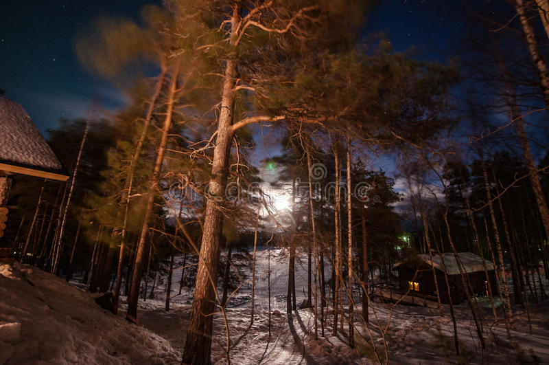 Nattskog arkivfoton