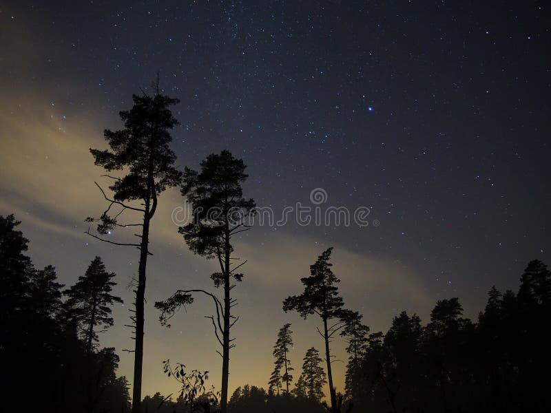 Nattskogträd och stjärnor royaltyfri bild