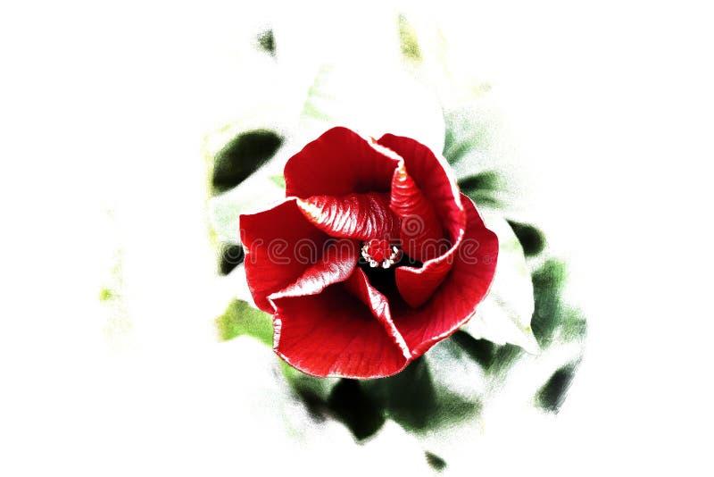 Natuer för gräsplan för blommakonstflowerart arkivfoton