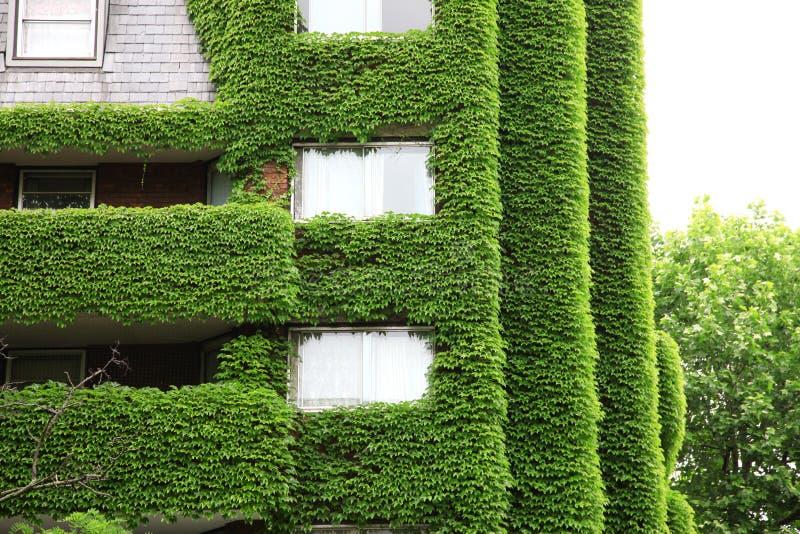 Naturökologie des grünen Hauses stockbilder