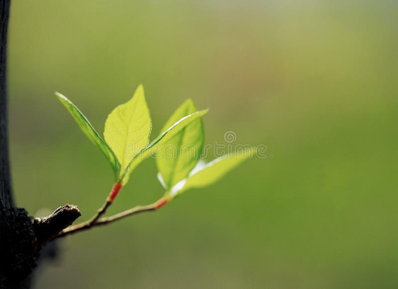 Natur lizenzfreies stockfoto