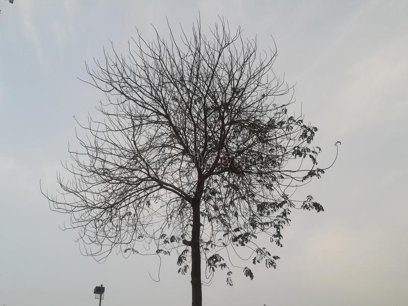 Natur royaltyfri bild