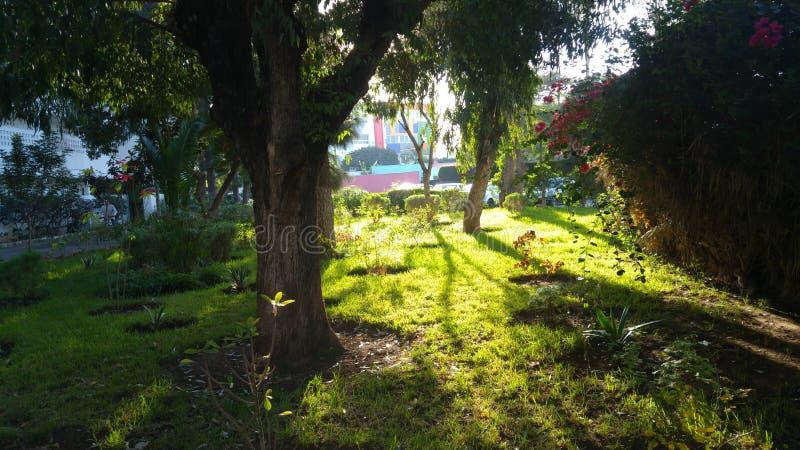 Natur immagine stock