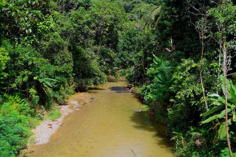 Natur, Annah Rais, Sarawak, Malaysia stockbilder