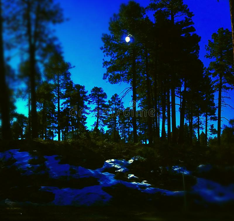 Natur Arizona royaltyfria foton