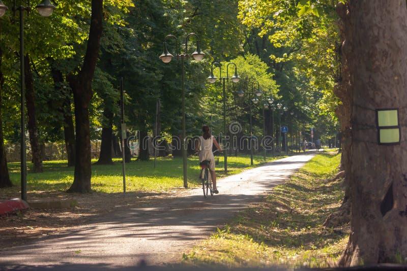 Natur att koppla av går bland träden längs väggarna av den härliga staden av treviso cyklarna nu på nästan varje huvudsakliga roa royaltyfria foton