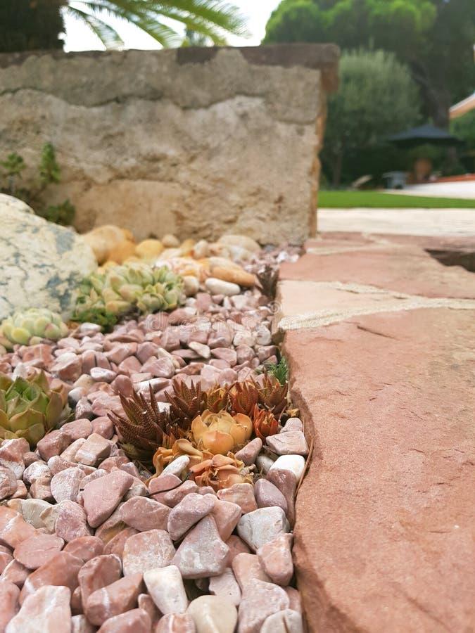 Natur auf Miniatur stockbild
