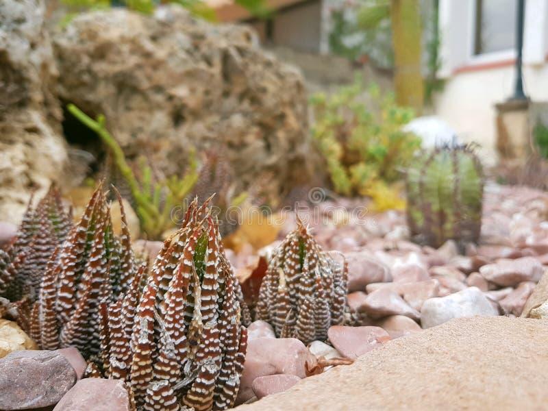 Natur auf Miniatur lizenzfreies stockbild