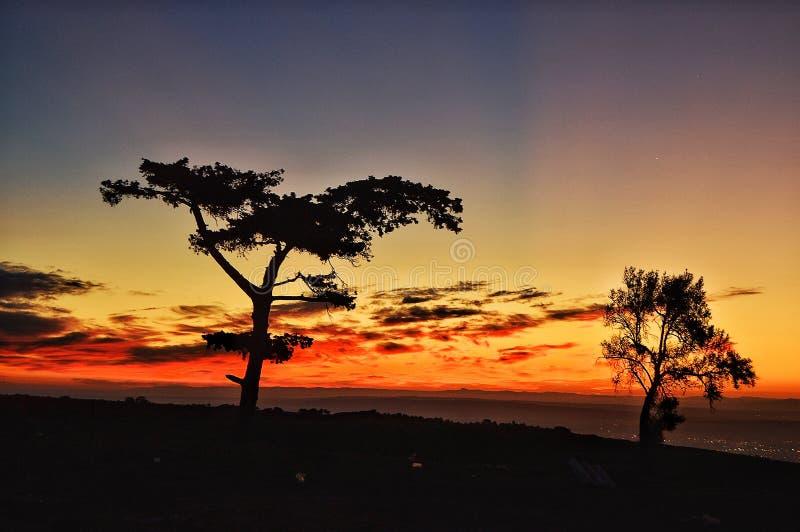 natur av Algeriet i oran arkivbilder