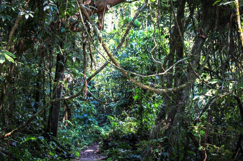 Natur av den Gunung Mulu nationalparken av Sarawak, Malaysia arkivfoto