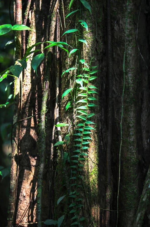 Natur av den Gunung Mulu nationalparken av Sarawak, Malaysia arkivfoton