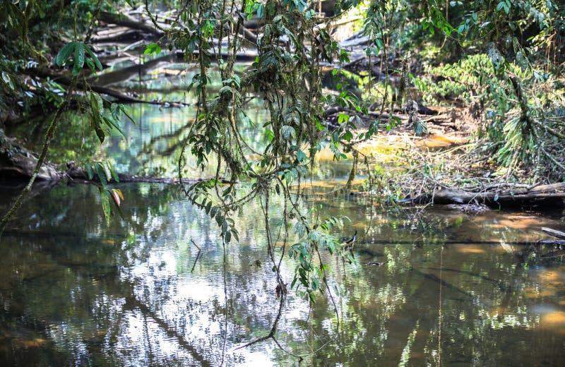 Natur av den Gunung Mulu nationalparken av Sarawak, Malaysia arkivbilder