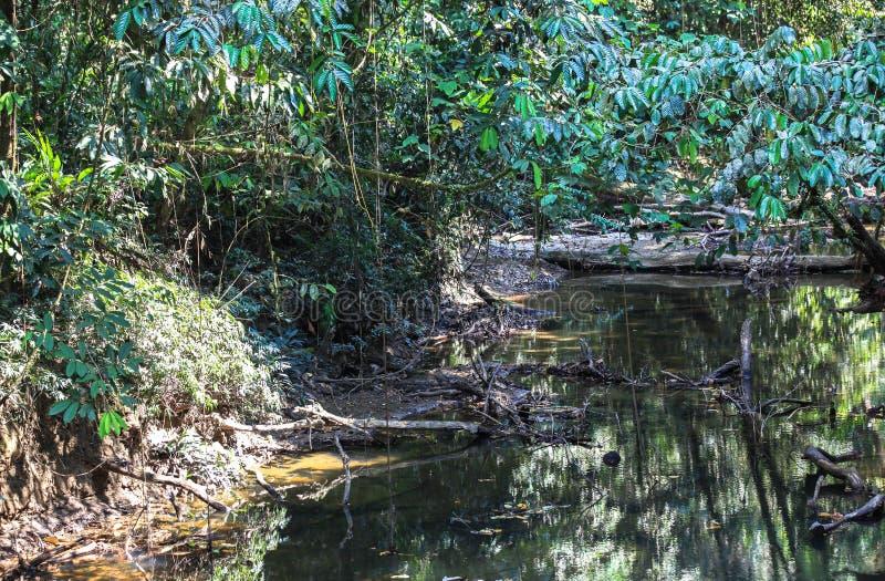 Natur av den Gunung Mulu nationalparken av Sarawak, Malaysia royaltyfri bild