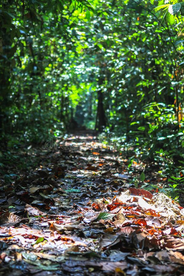 Natur av den Gunung Mulu nationalparken av Sarawak, Malaysia royaltyfri foto