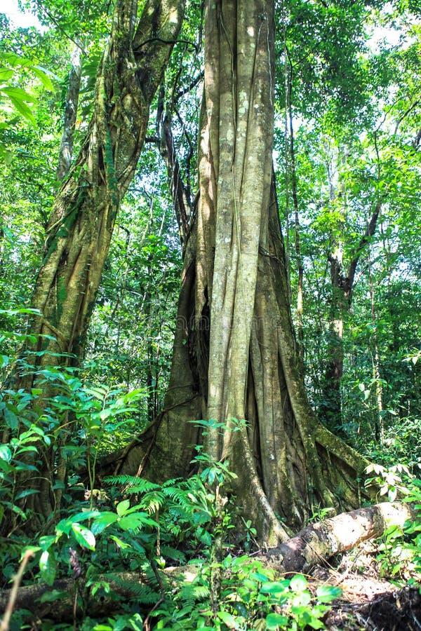 Natur av den Gunung Mulu nationalparken av Sarawak, Malaysia royaltyfri fotografi
