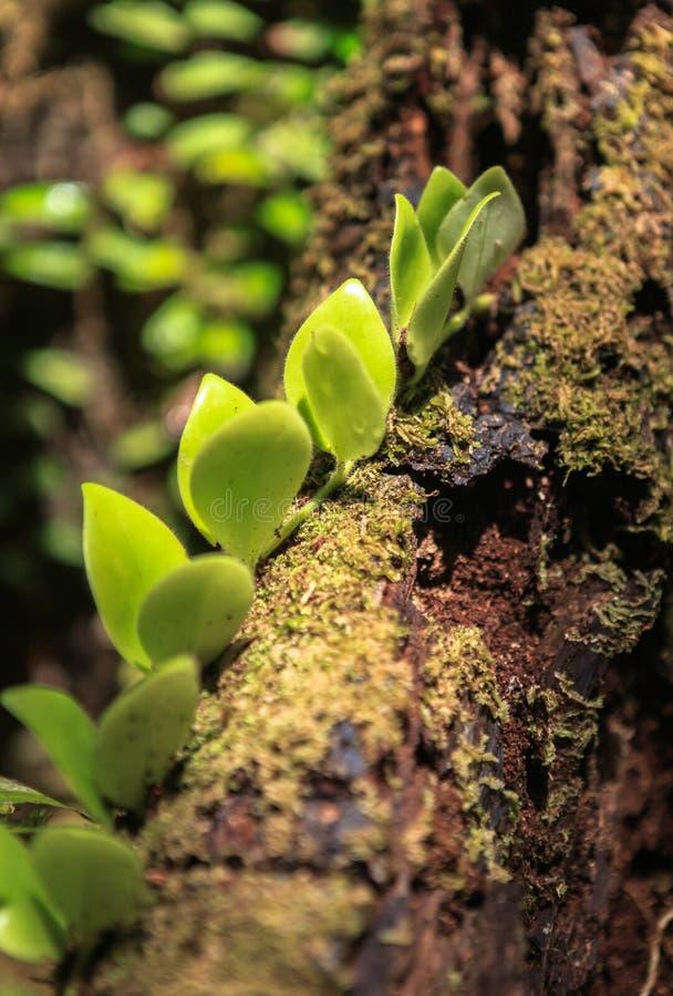 Natur av den Gunung Mulu nationalparken av Sarawak, Malaysia fotografering för bildbyråer