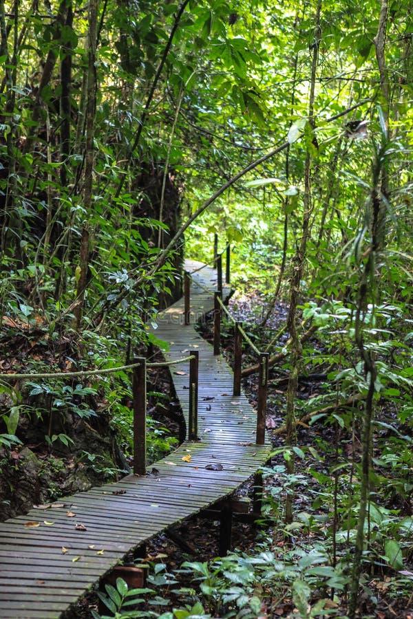 Natur av den Gunung Mulu nationalparken av Sarawak, Malaysia royaltyfria bilder