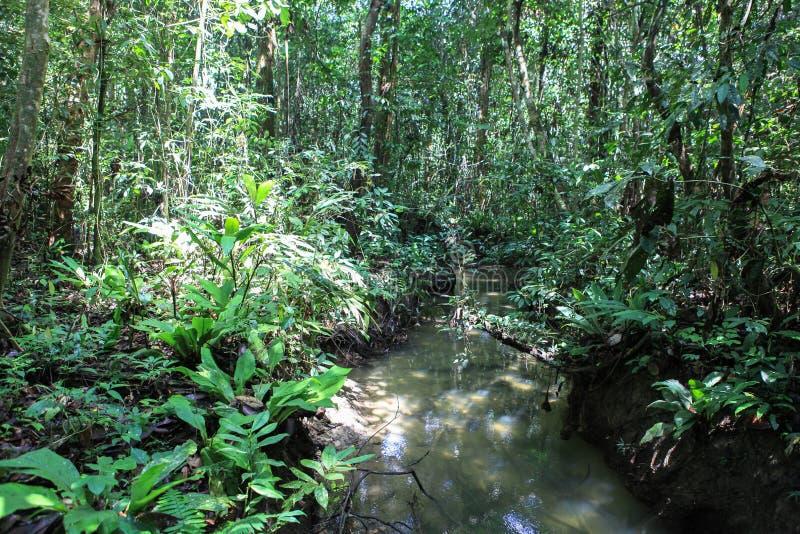 Natur av den Gunung Mulu nationalparken av Sarawak, Malaysia royaltyfria foton
