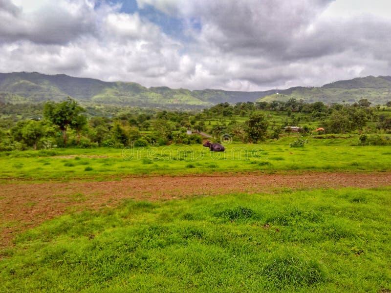 Natur av Indien det nya grönt gräs och berget royaltyfri fotografi