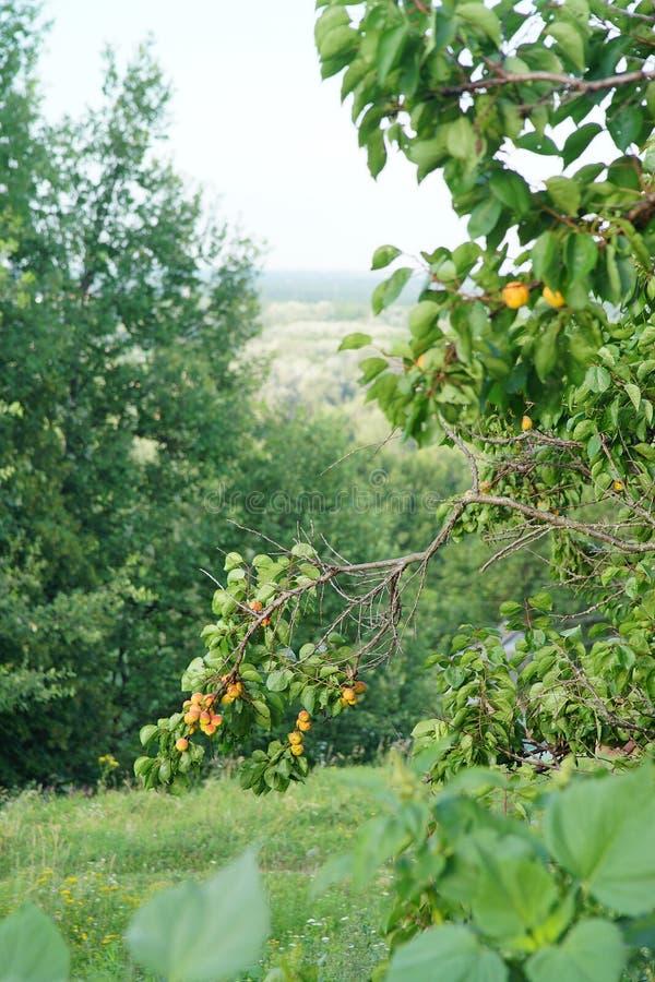 Natur av Ukraina arkivbild