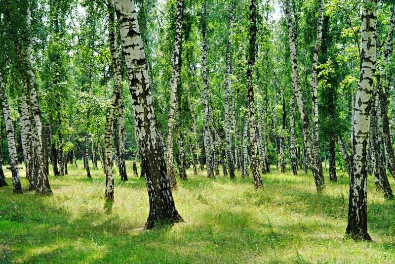 Natur av Ukraina Myrhorod royaltyfria bilder