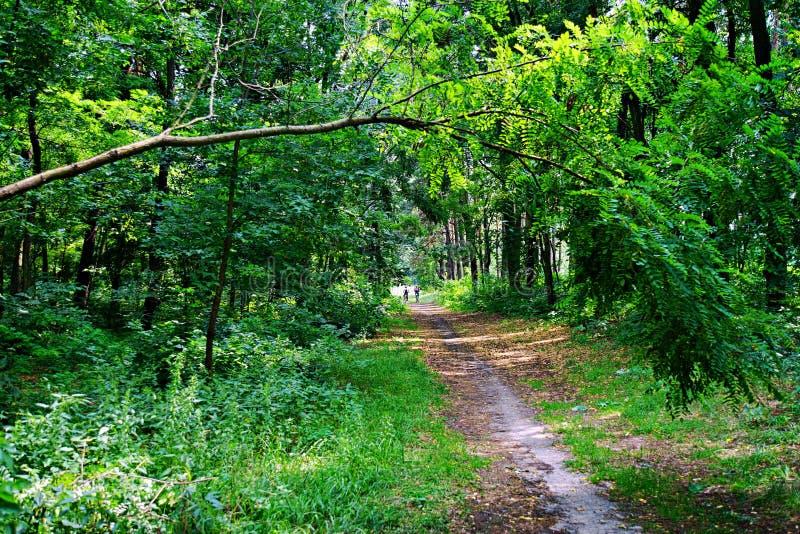 Natur av Ukraina Myrhorod royaltyfri foto