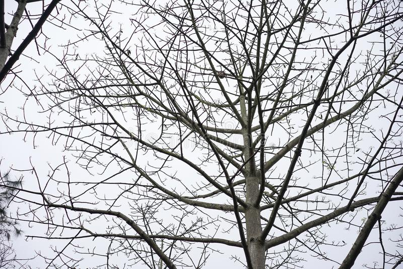 Natur-Baum trocken lizenzfreies stockfoto