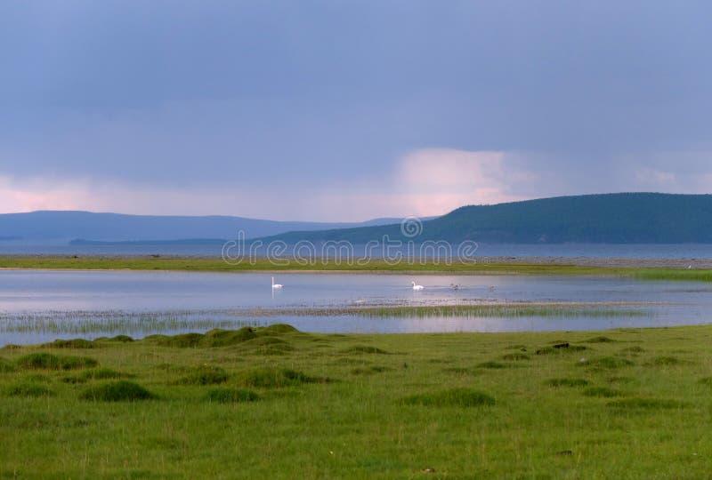 Natur bei Mongolei lizenzfreie stockfotos