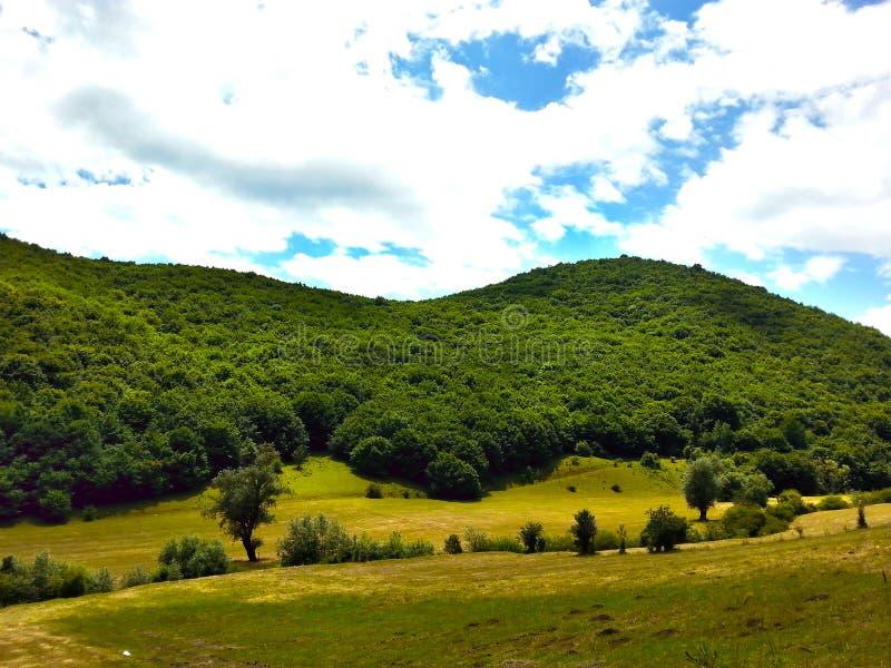 Natur bewölkt Holzwaldgrünes Gras lizenzfreie stockbilder