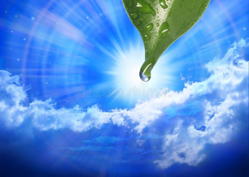 Natur-Blatt-Wasser-Tropfen-Himmel lizenzfreies stockbild