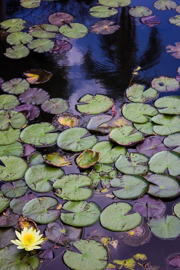 Natur botanisch lizenzfreie stockbilder