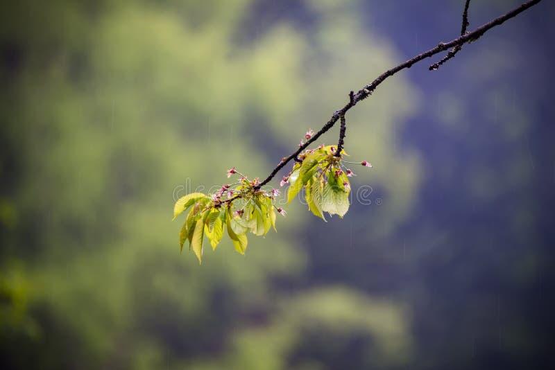 Natur Carpathians i regnet royaltyfri foto
