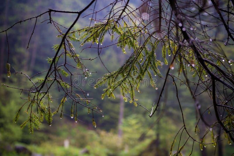 Natur Carpathians i regnet Nära den vattenfallKamyanka Lviv regionen royaltyfria bilder